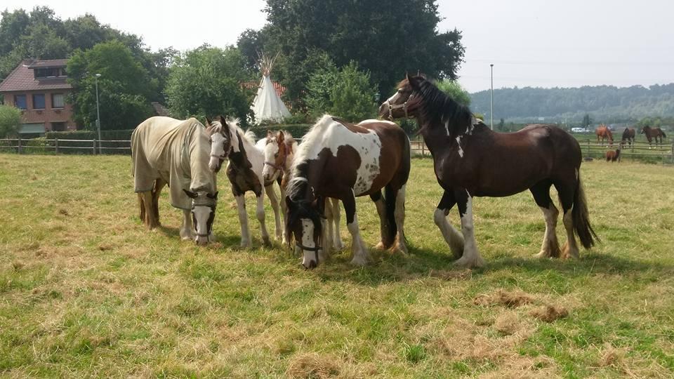De kudde op ponykamp